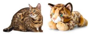 Élethű bengáli plüss macska összehasonlítása a valódival.