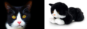 Fekete-fehér színű macsek és realisztikus plüss pajtásra